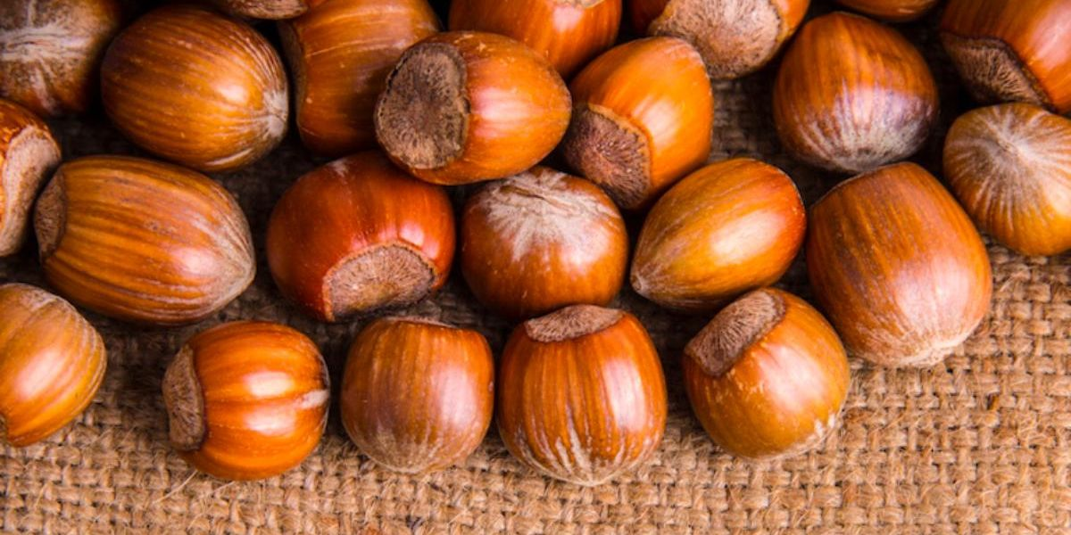 Can Hazelnuts Transform Farming?