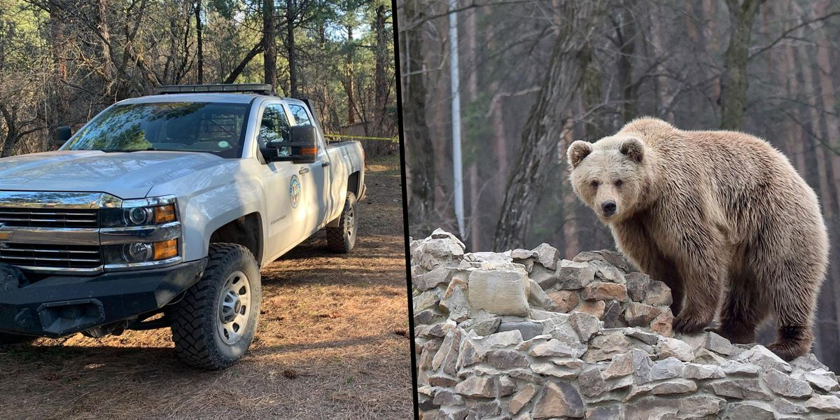 Colorado Woman Walking Her Dogs is Killed and Partially Eaten by Bear and Cub