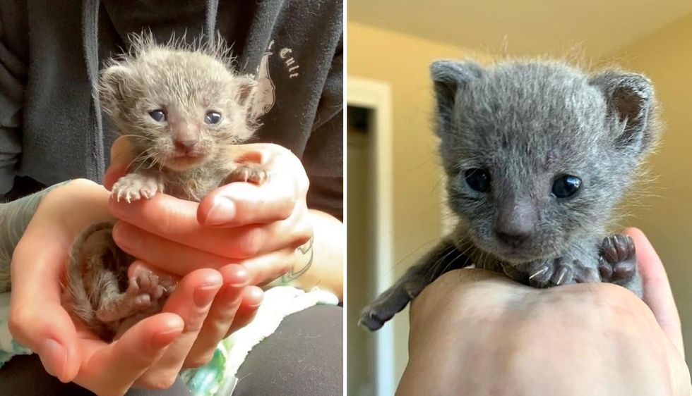 Kitten Captured Hearts with Her Fuzzy Hair and Tiny Squeaks After Being Rescued With Her Sister