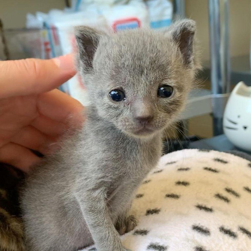 fuzzy kitten, adorable
