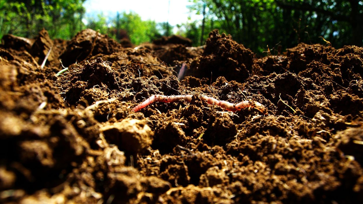 Pesticides Threaten the 'Foundations of the Web of Life,' New Soil Study Warns