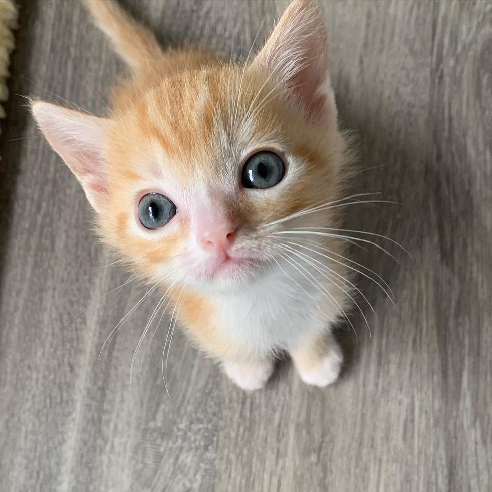 tiny kitten, big eyes, ginger kitten