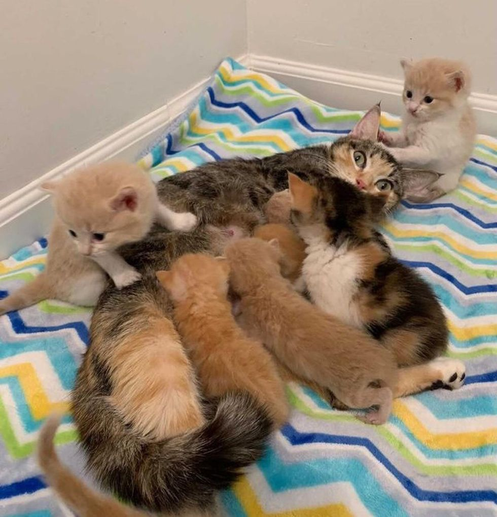 Mother cat, nursing, baby kittens