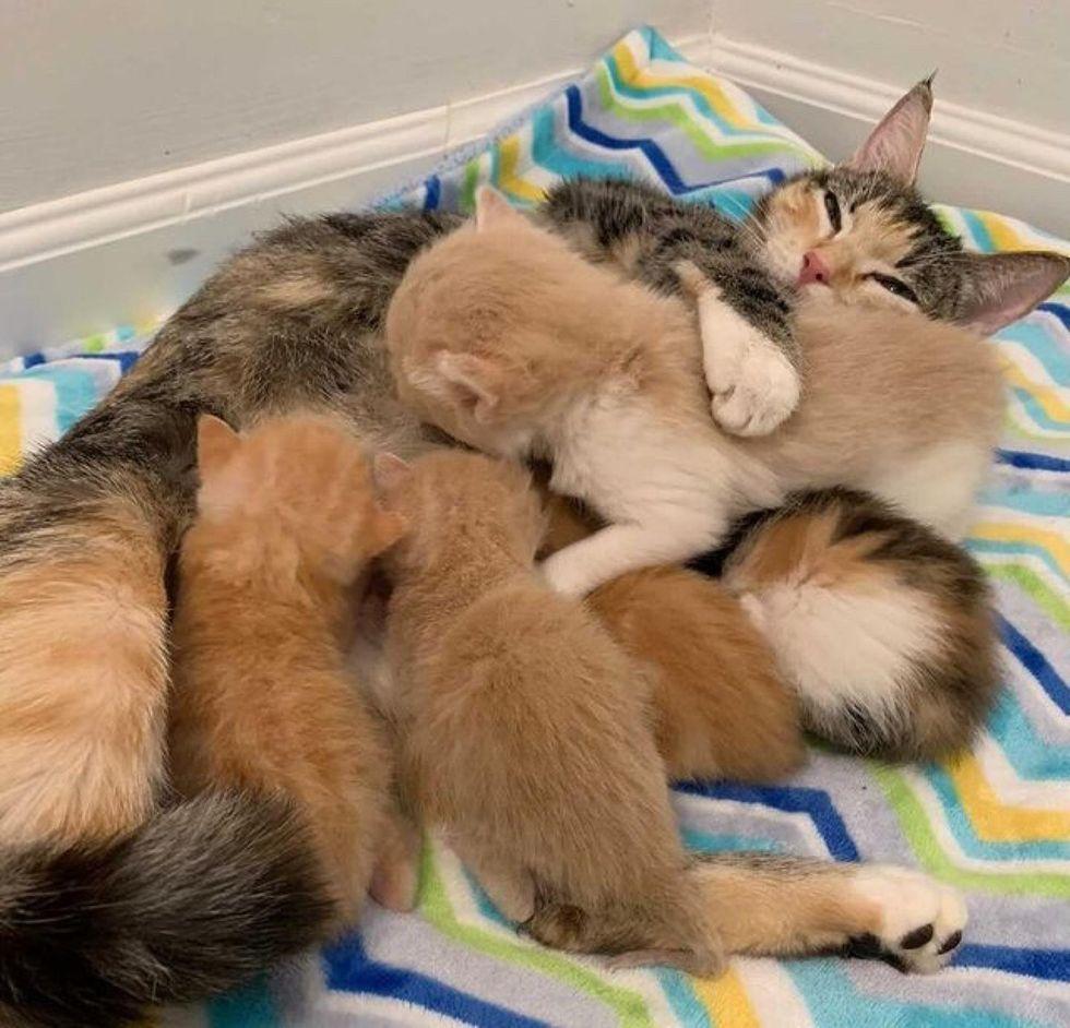 sweet cat mom, cuddling, kittens