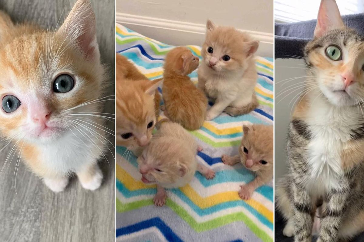 Cat Found with 2 Sets of Kittens is So Happy to Have Her Dream Come True