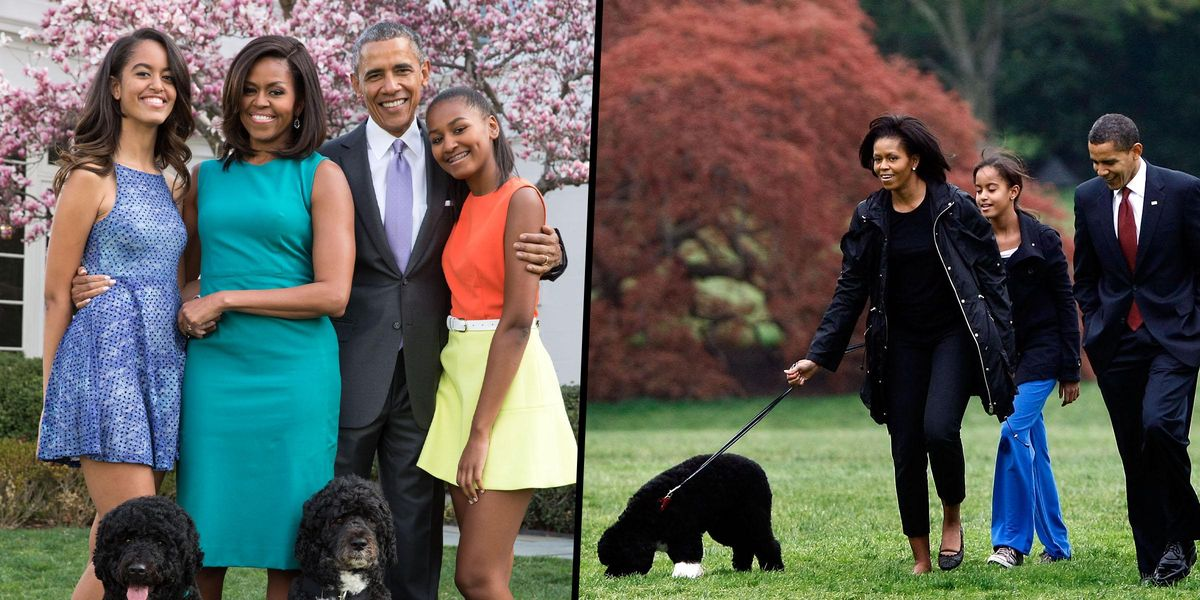 Bo, the Obama's' Dog, has Died Aged 12