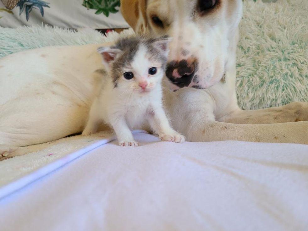foster kitten, pup, dog