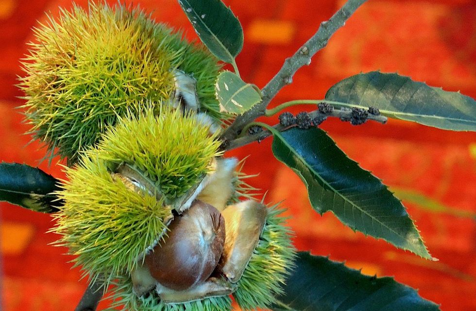 USDA May Allow Genetically Modified Trees to Be Released Into the Wild