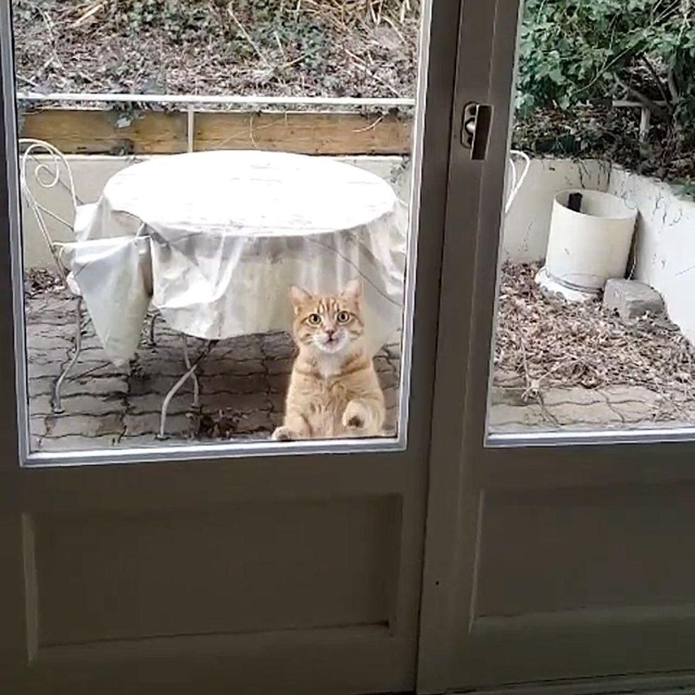neighbor cat, visit