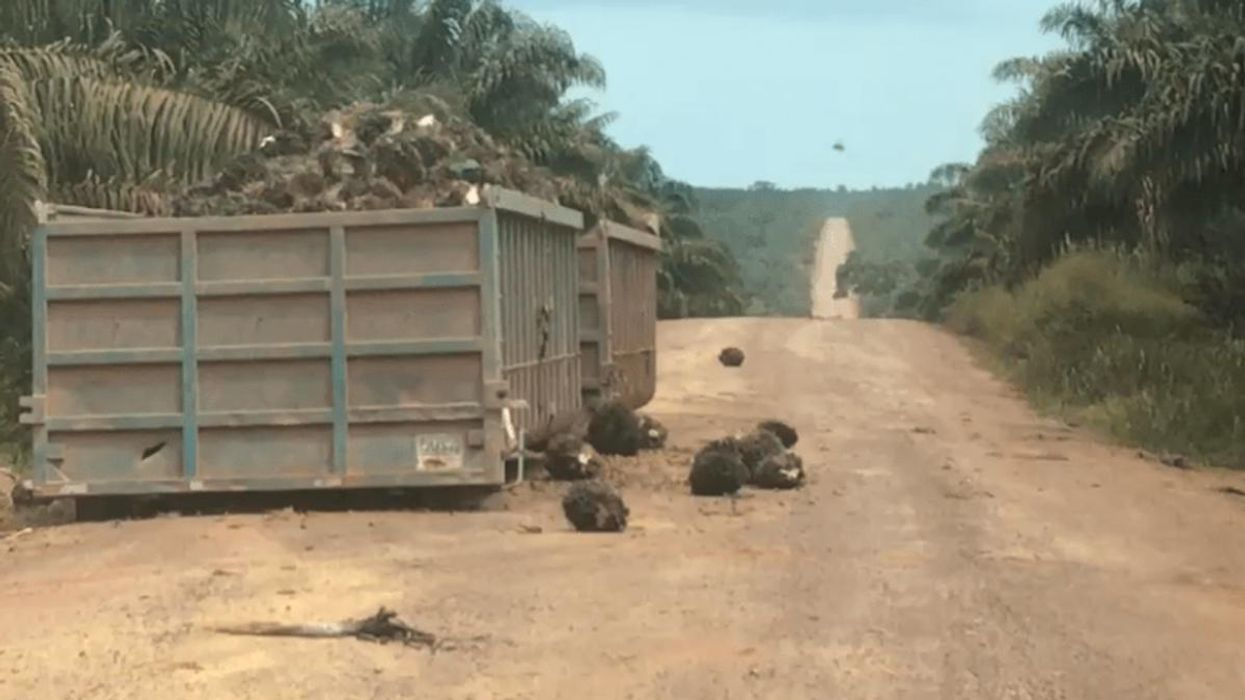 Video Reveals Water Contamination, 'Brazen Disregard' for Amazon by 'Sustainable' Palm Oil Industry