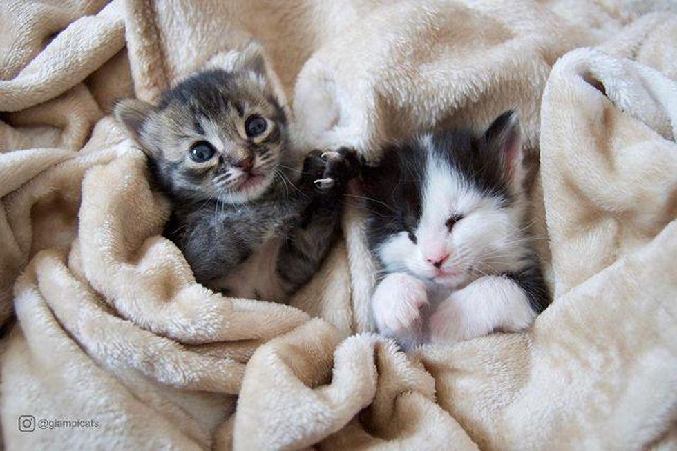 Kittens, foster kittens, cuddling