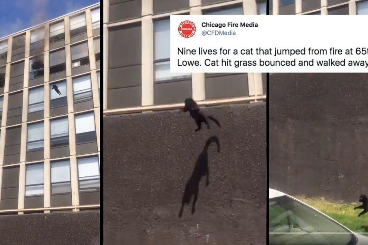 Chicago cat miraculously uninjured after leaping from the 5th story of a burning building