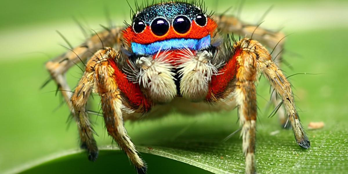 We Need to Talk About Spider Conservation