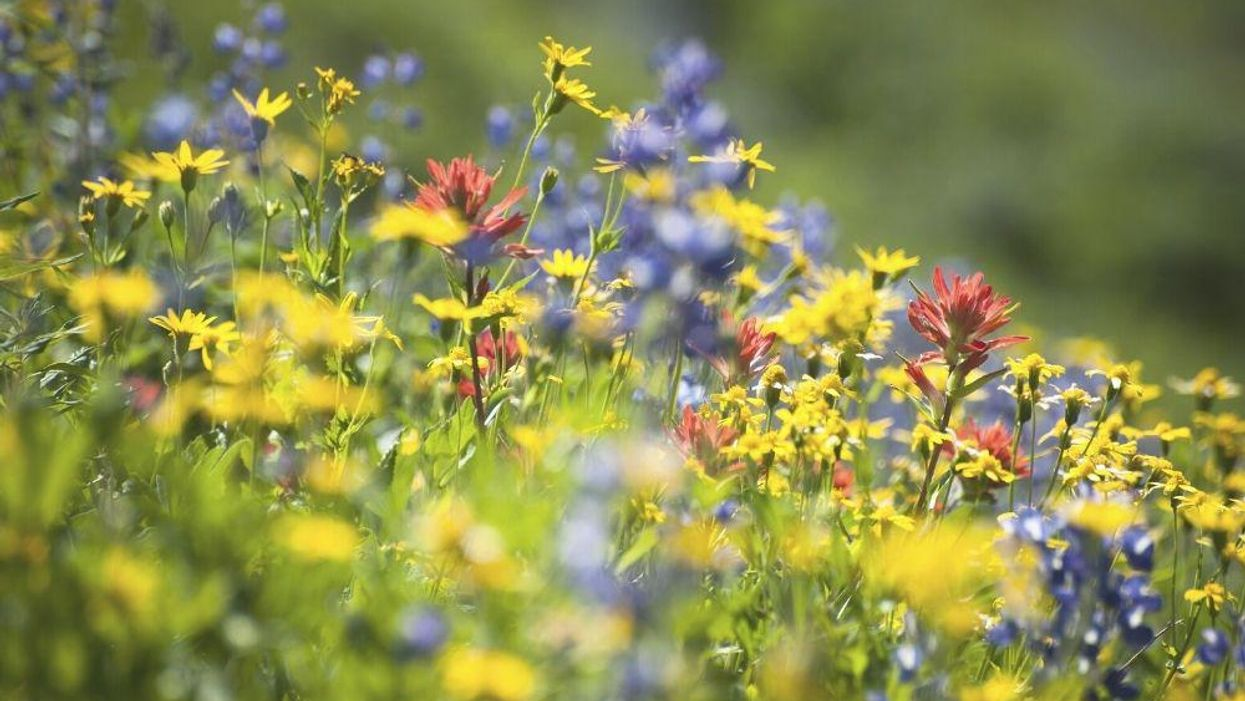 The 4 Best Places to See Wildflowers in the U.S.