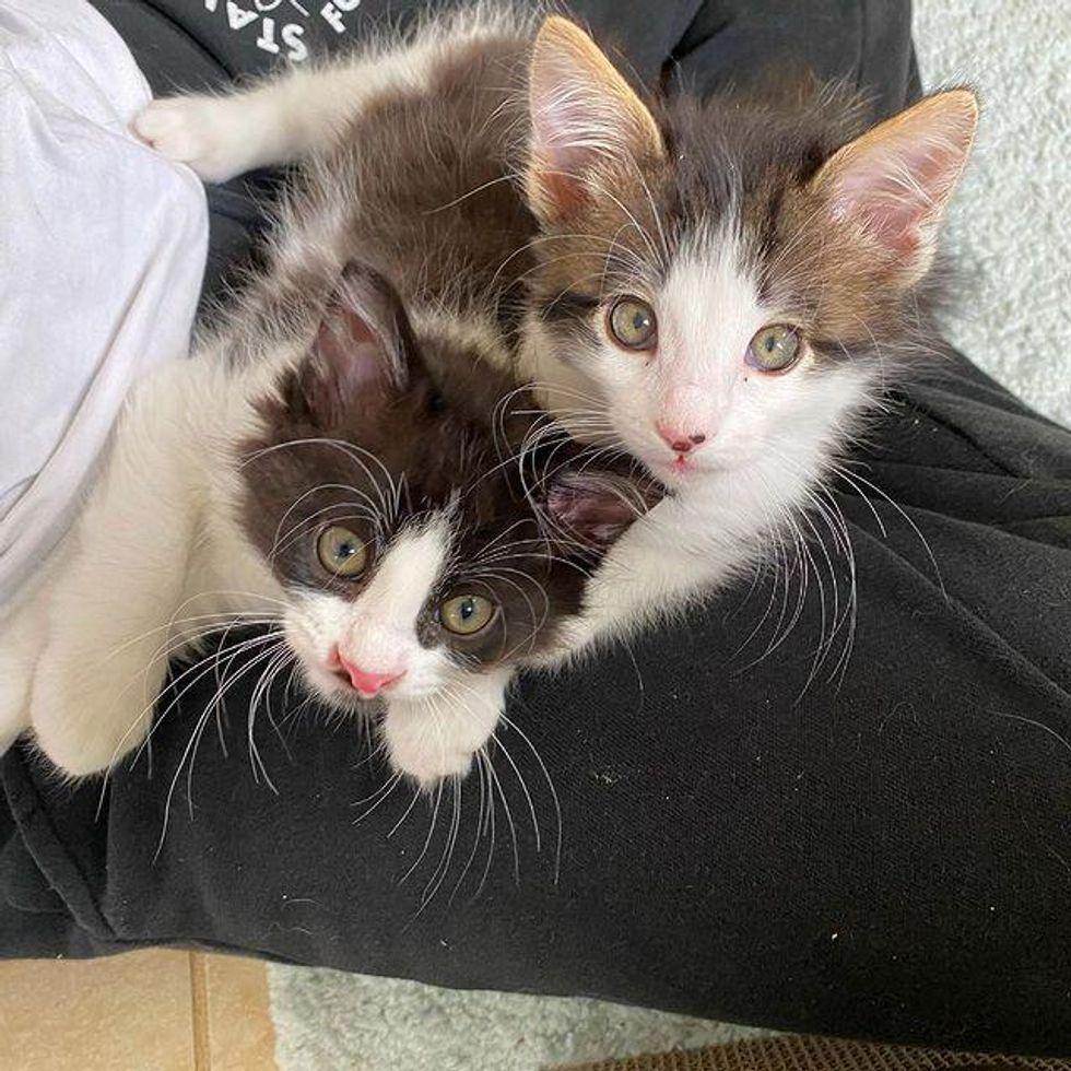 lap cats