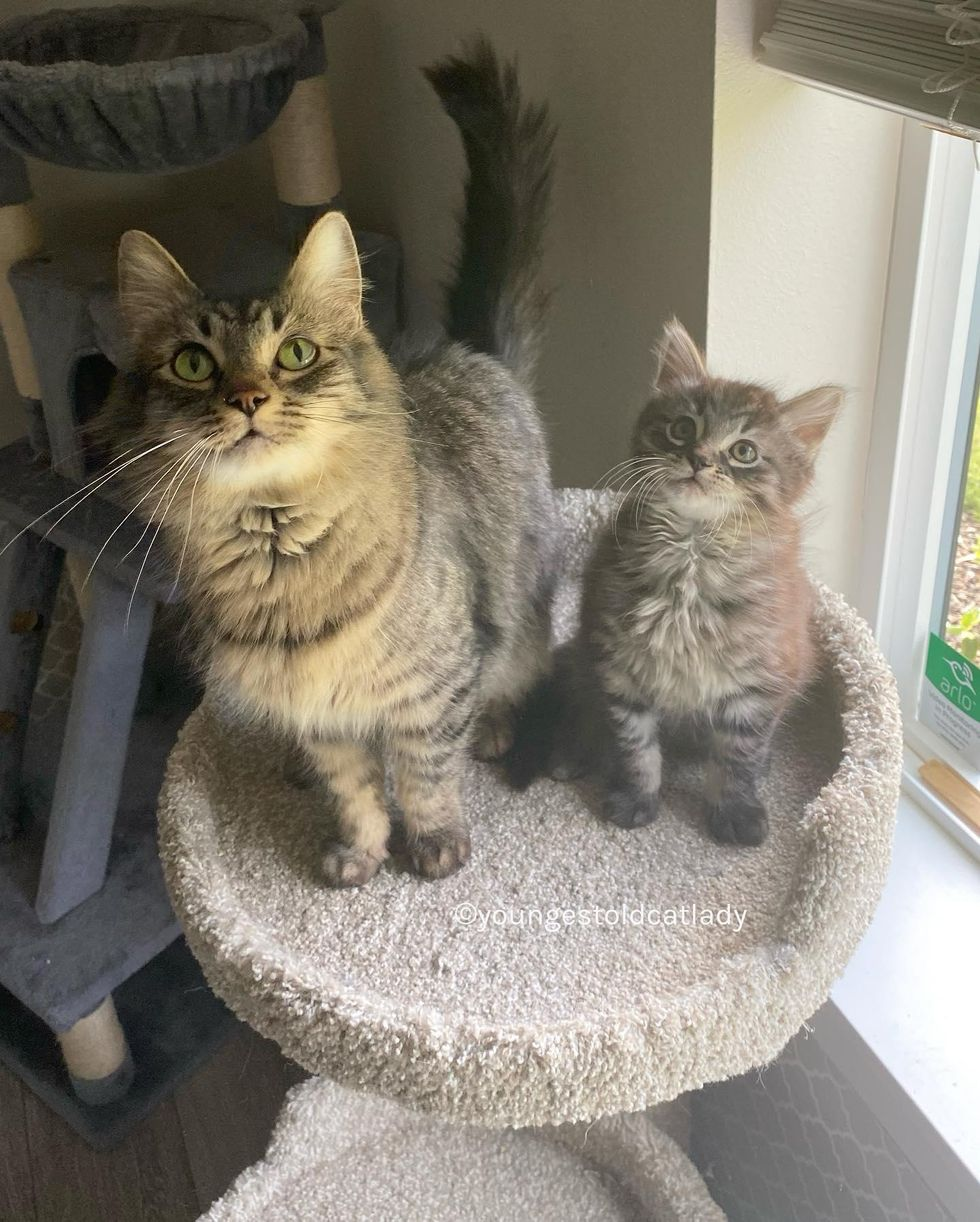 tabby cats, mother and son