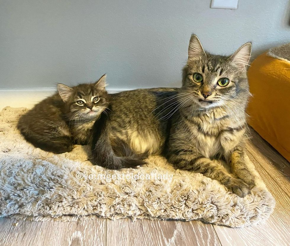 tabby cats, snuggle up