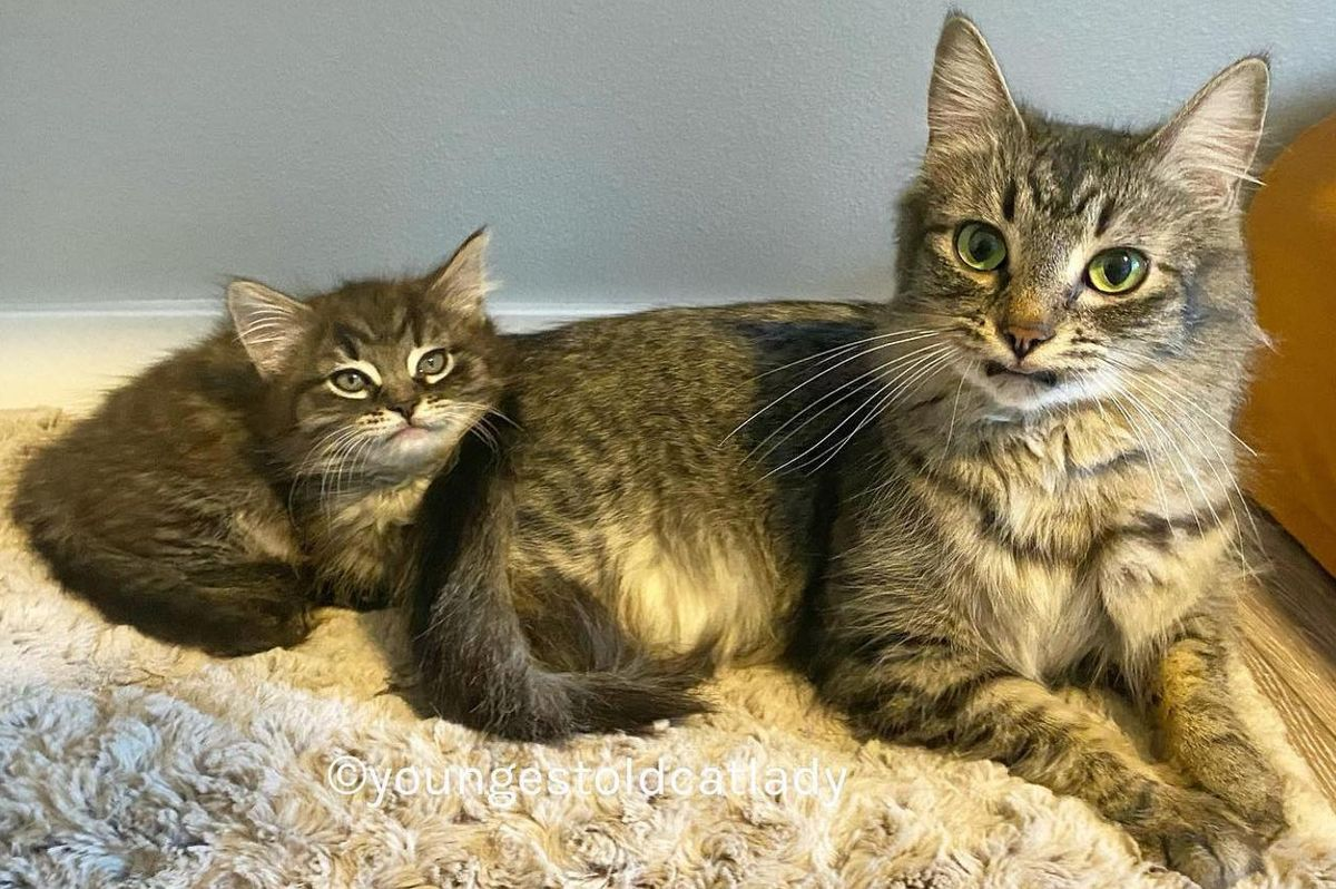 Cat and Her Only Kitten Share Unbreakable Bond - Journey to Their Dream Home Together