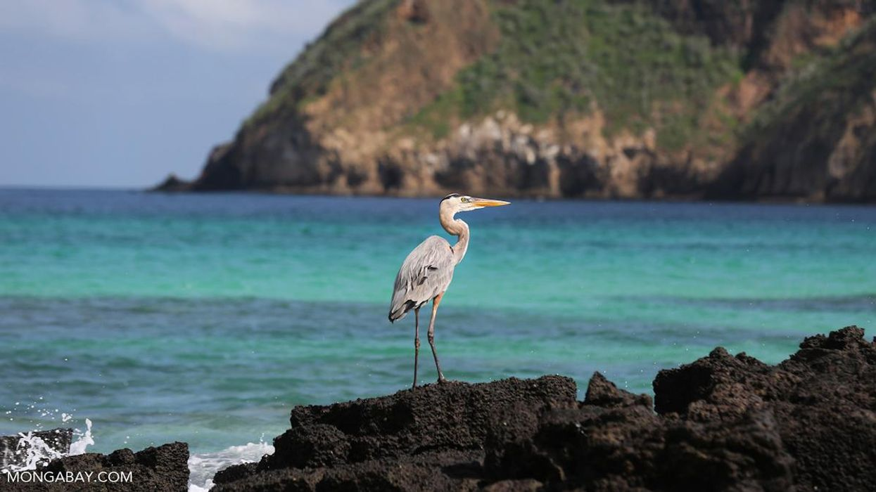 DiCaprio, Conservationists Launch $43M Plan to Restore Galápagos Islands
