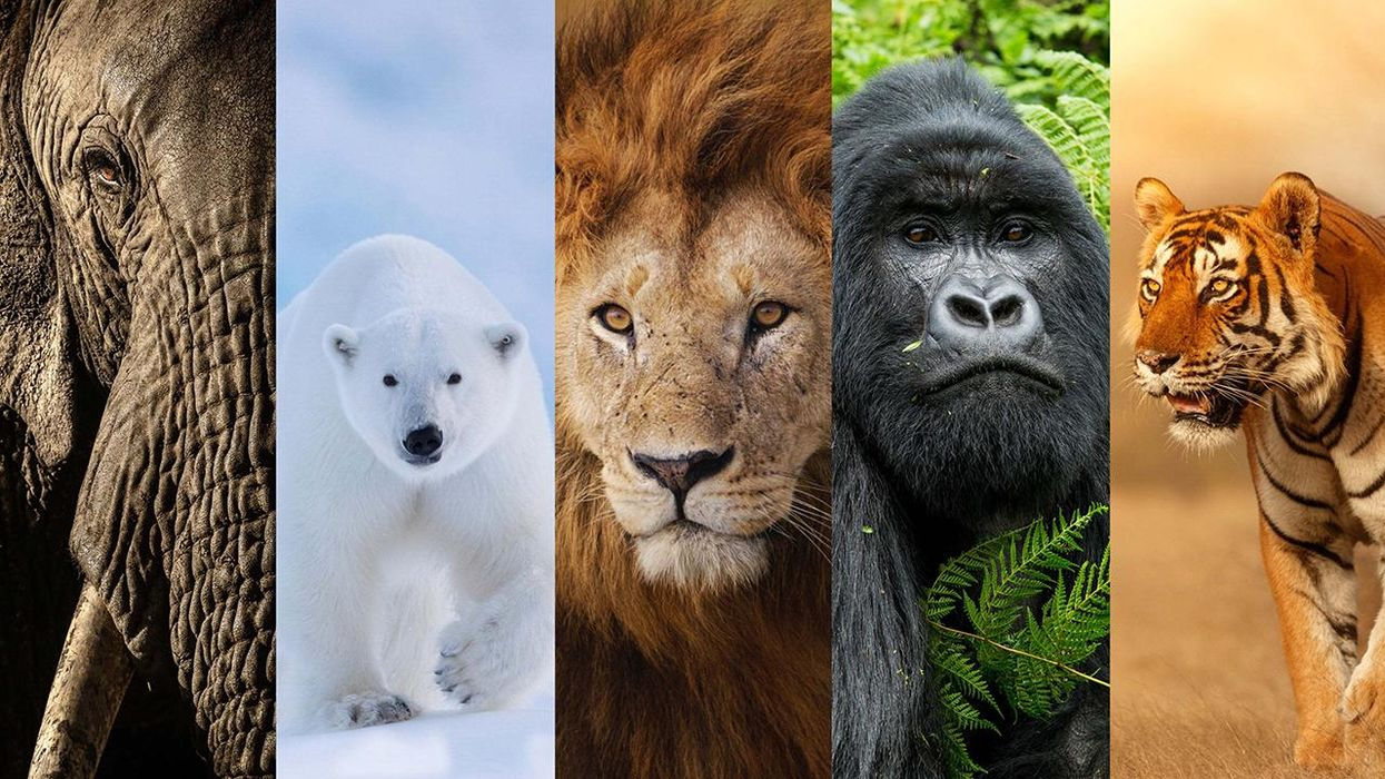 The 'New Big 5' Picks World's Most Photogenic Animals to Celebrate Life, Not Death