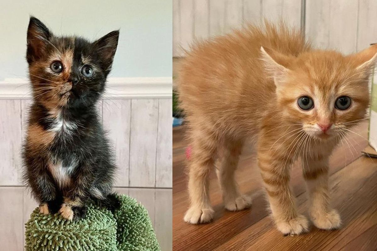 Kittens with Lots of Attitude Look Out for Each Other and Befriend Other Cats Along the Way