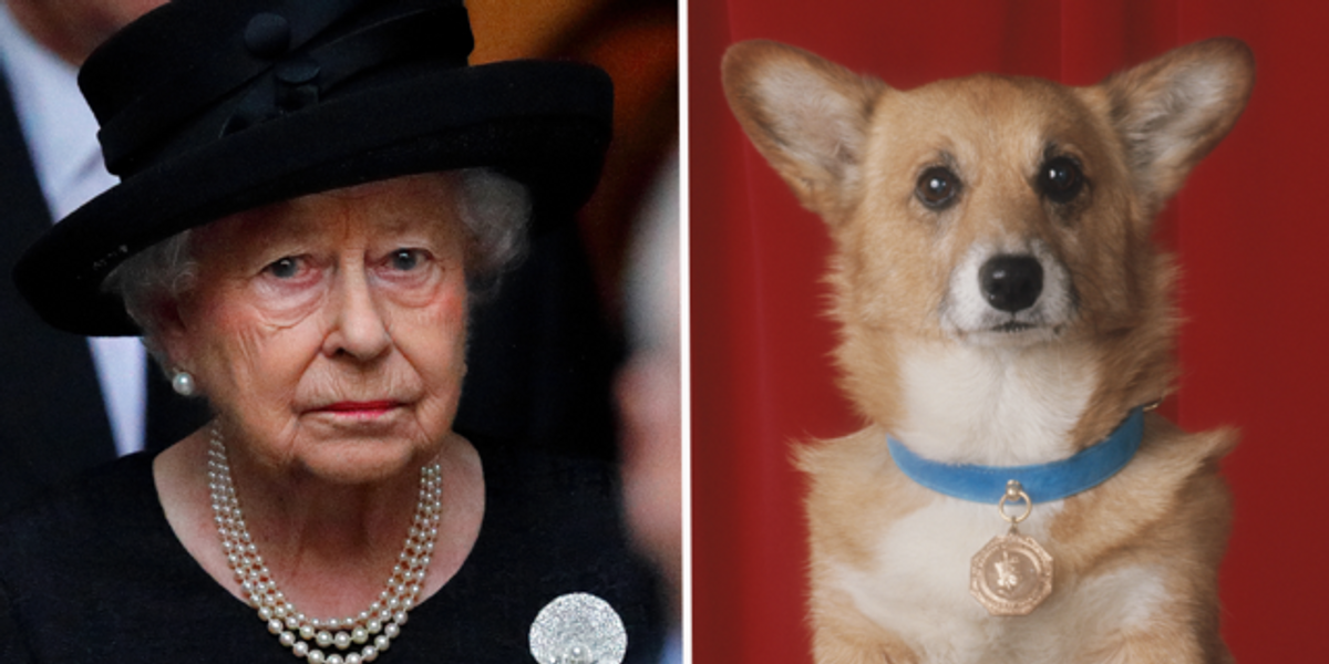 Queen 'Devastated' After Five-Month-Old Puppy Reportedly Dies