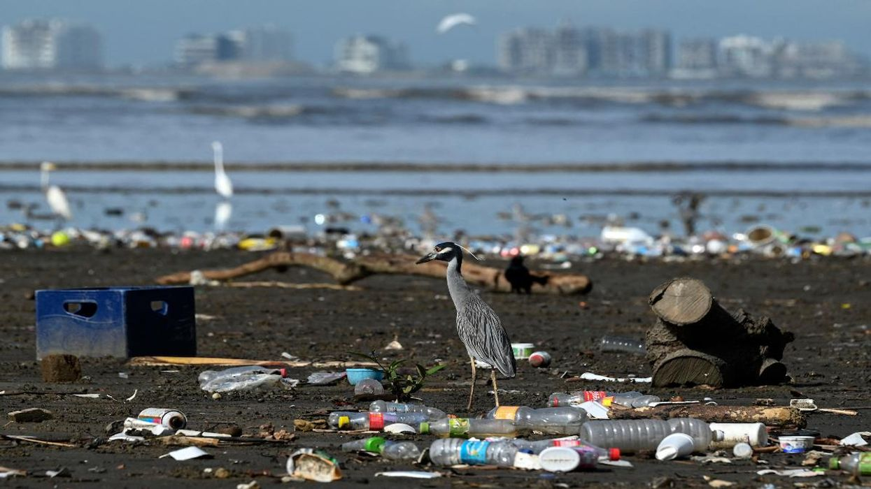 20 Companies Produce 55% of All Single-Use Plastic Waste, Report Finds
