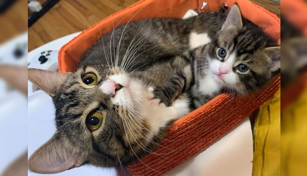 Cat Got Back to Her Beloved Kitten and Never Left His Side - They Hope for Home Together