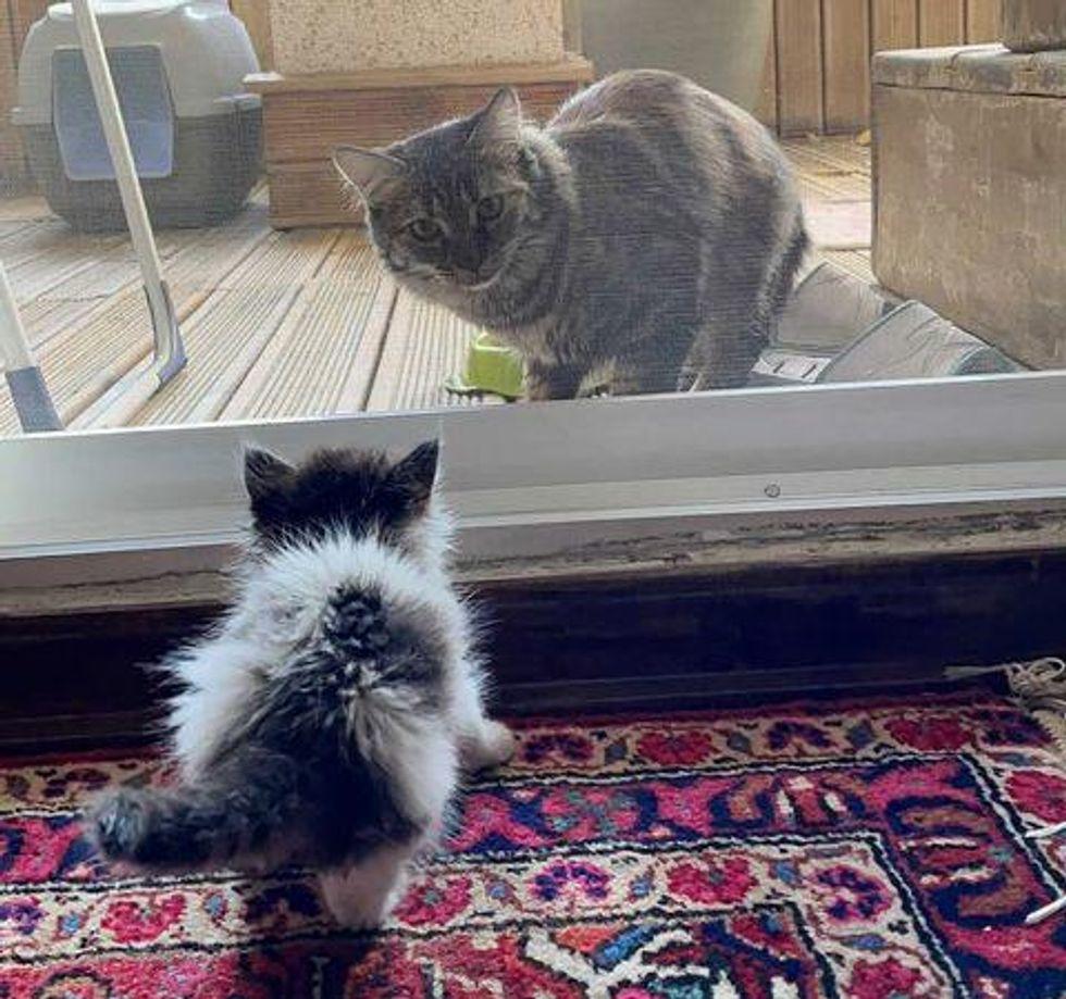 kitten meeting cat