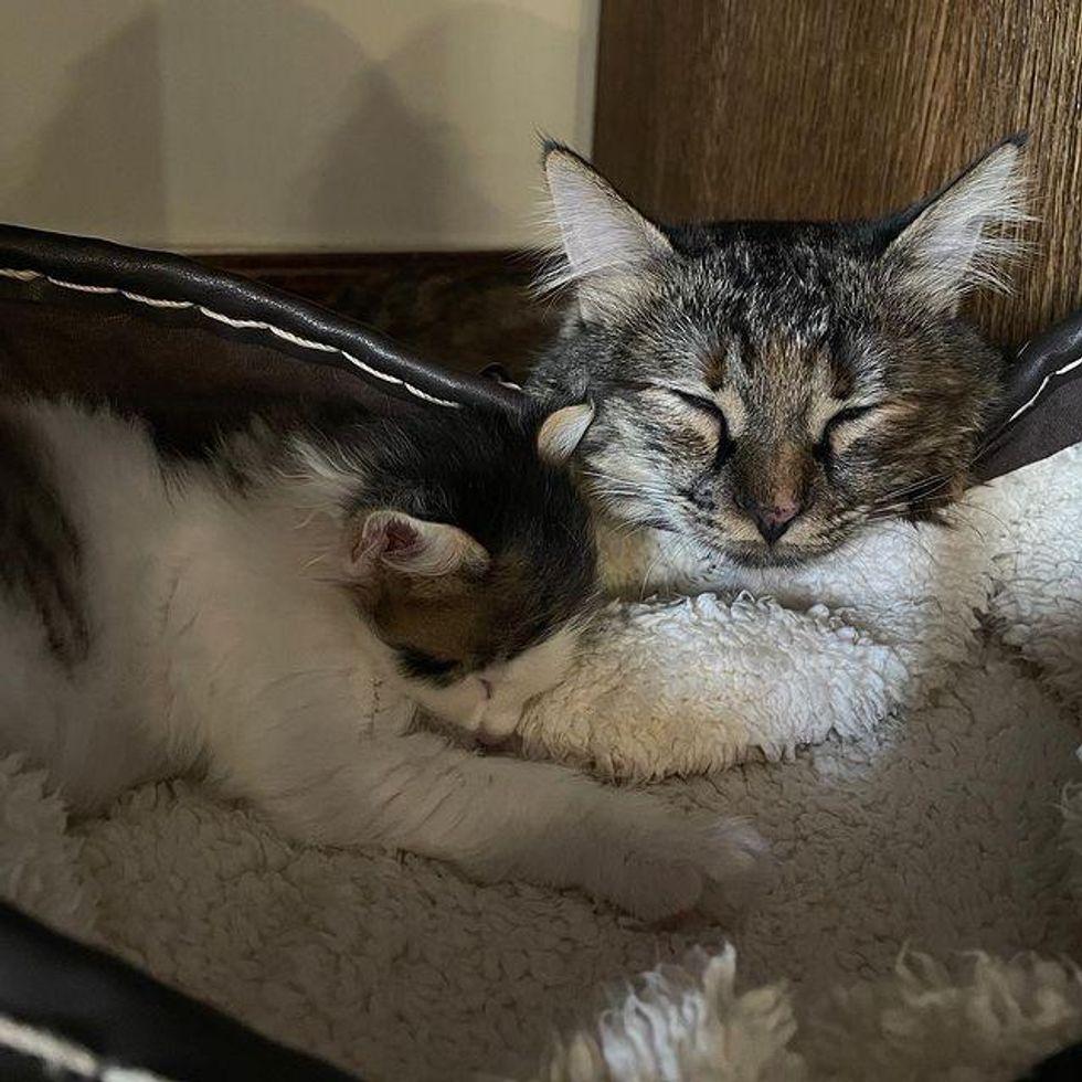 cat and kitten, best friends