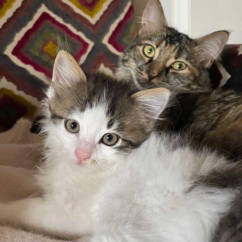best friends, snuggles