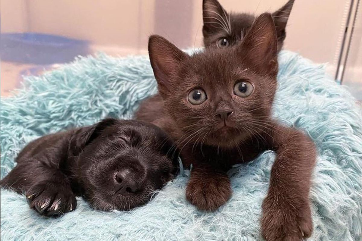 Kittens Become Sweetest Friends to Pups Before Finding Their Perfect Home