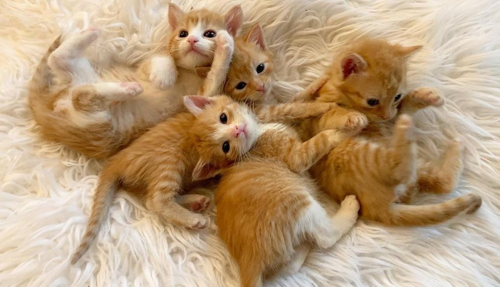 4 Kittens Help Each Other Thrive as They Transform on Their Journey to Better Life
