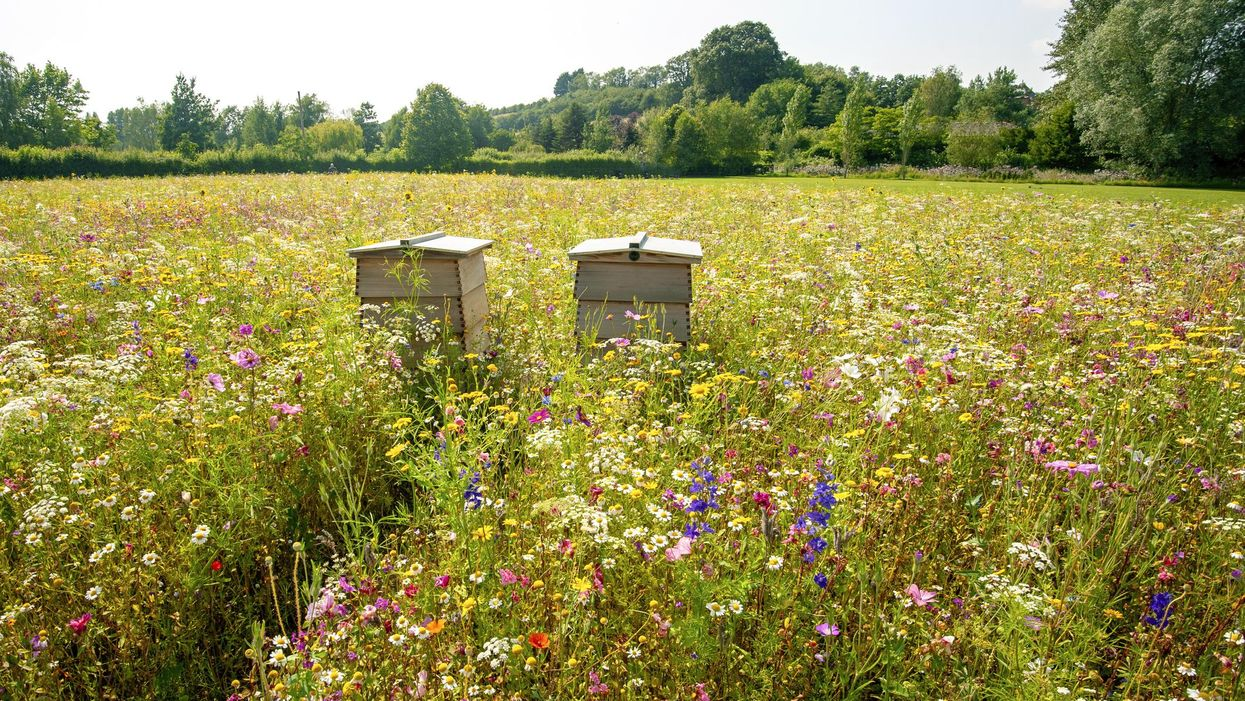 So You Want to Be a Beekeeper ... or Just Be There for the Bees