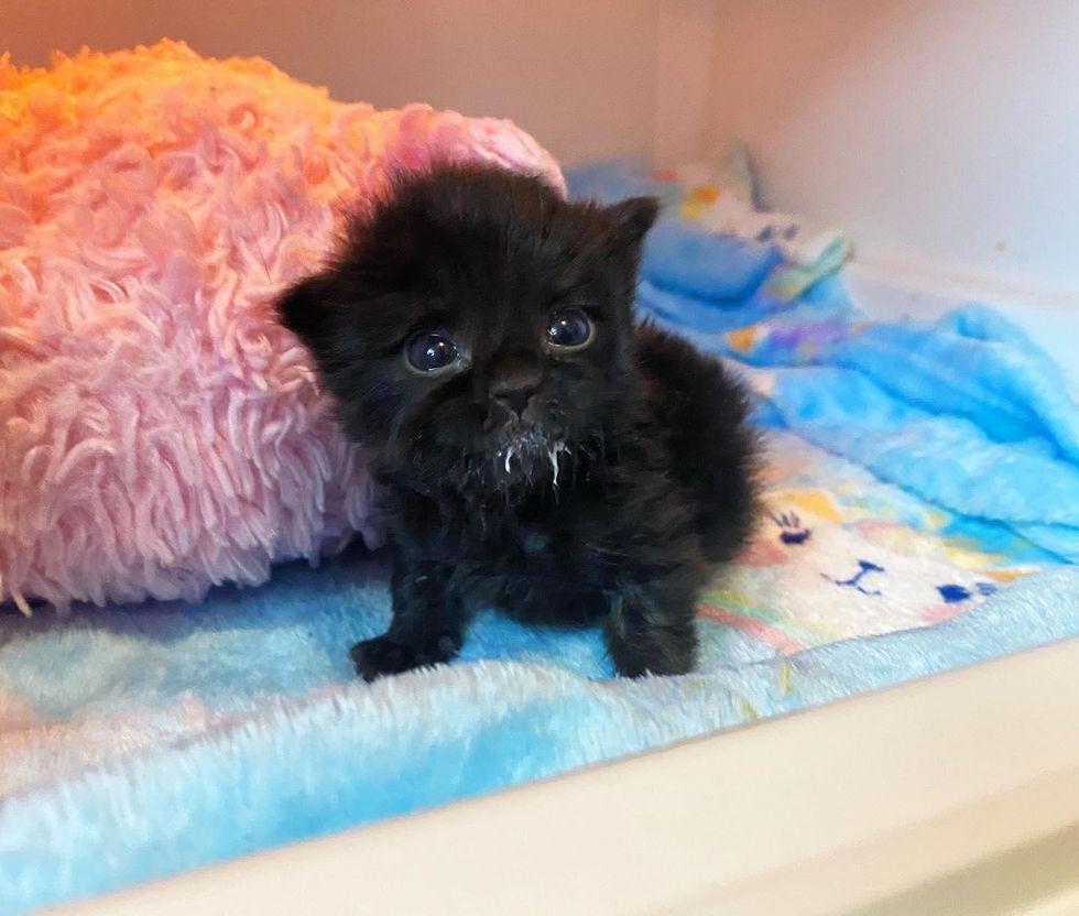 kitten milkstache