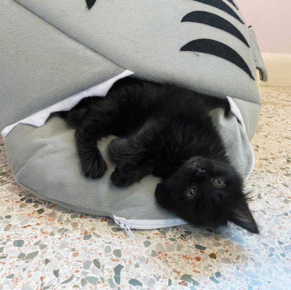 shark bed, kitten bed