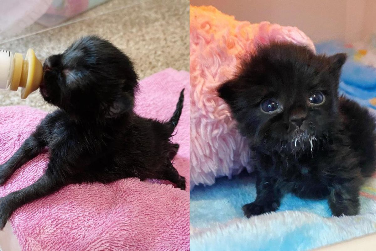 Kitten Found Alone in Driveway Has Strong Personality and Turns into Beautiful Fluffy Cat