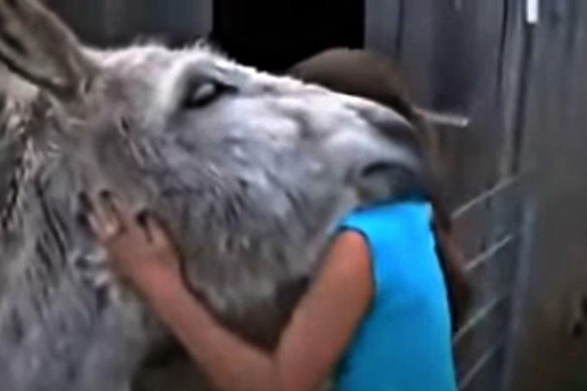 Touching video shows a donkey overwhelmed with emotion after seeing the girl who raised him