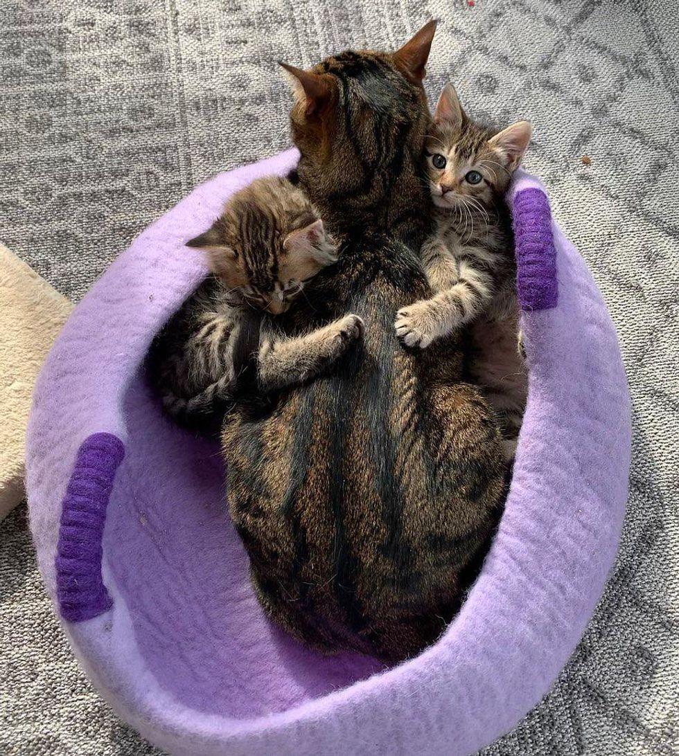 kitten hugs, tabby cats