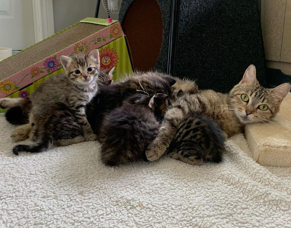 cat mom, nursing kittens