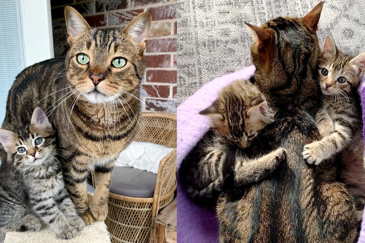 Cat Helps Care for Kittens His Family Brings Home and Turns Their Lives Around