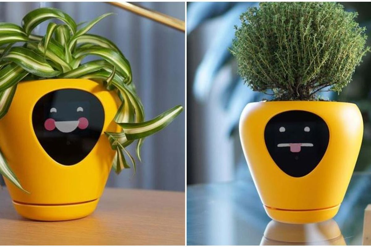 New smart planter shows your house plants' 'feelings' so you don't kill them