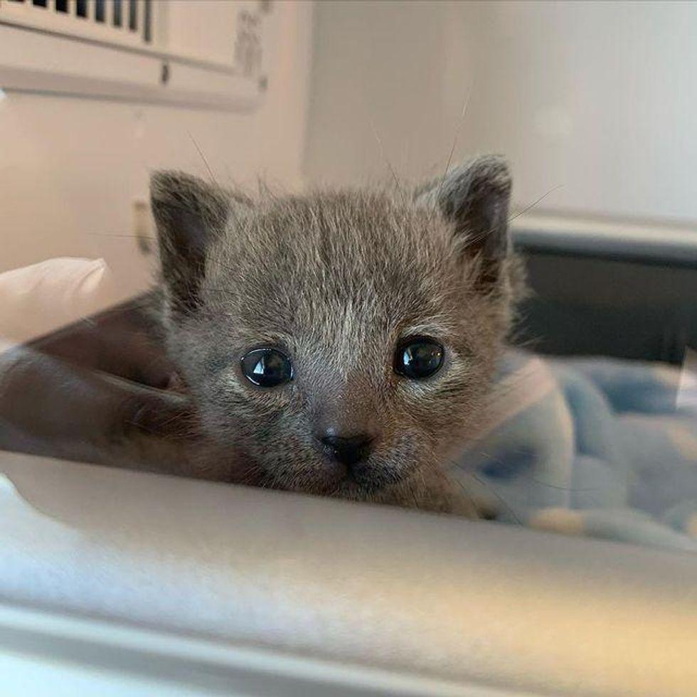 tiny kitten, small sized