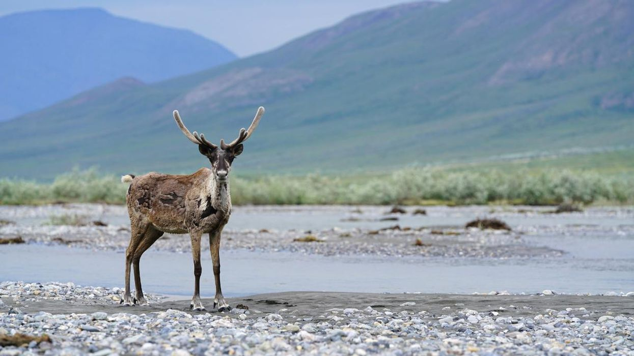 Biden Suspends Oil Leases in Arctic National Wildlife Refuge While Supporting Drilling Elsewhere in Alaska