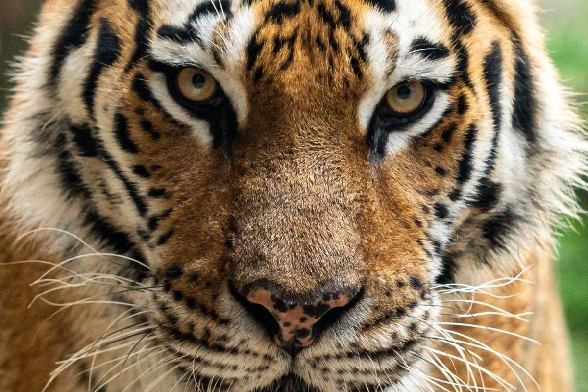 The 'Big 5' were trophy hunters' most prized kills. Now there's a 'New Big 5' to 'shoot.'