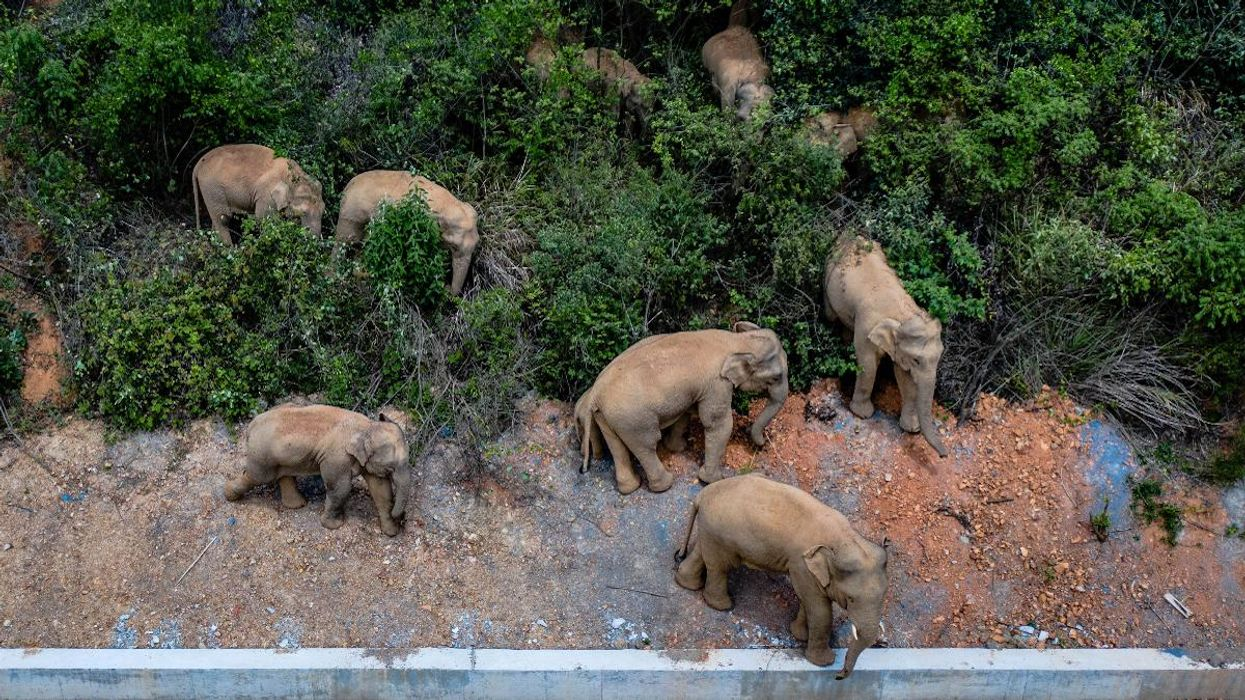 15 Elephants Are on a Mysterious, Epic Journey Across China