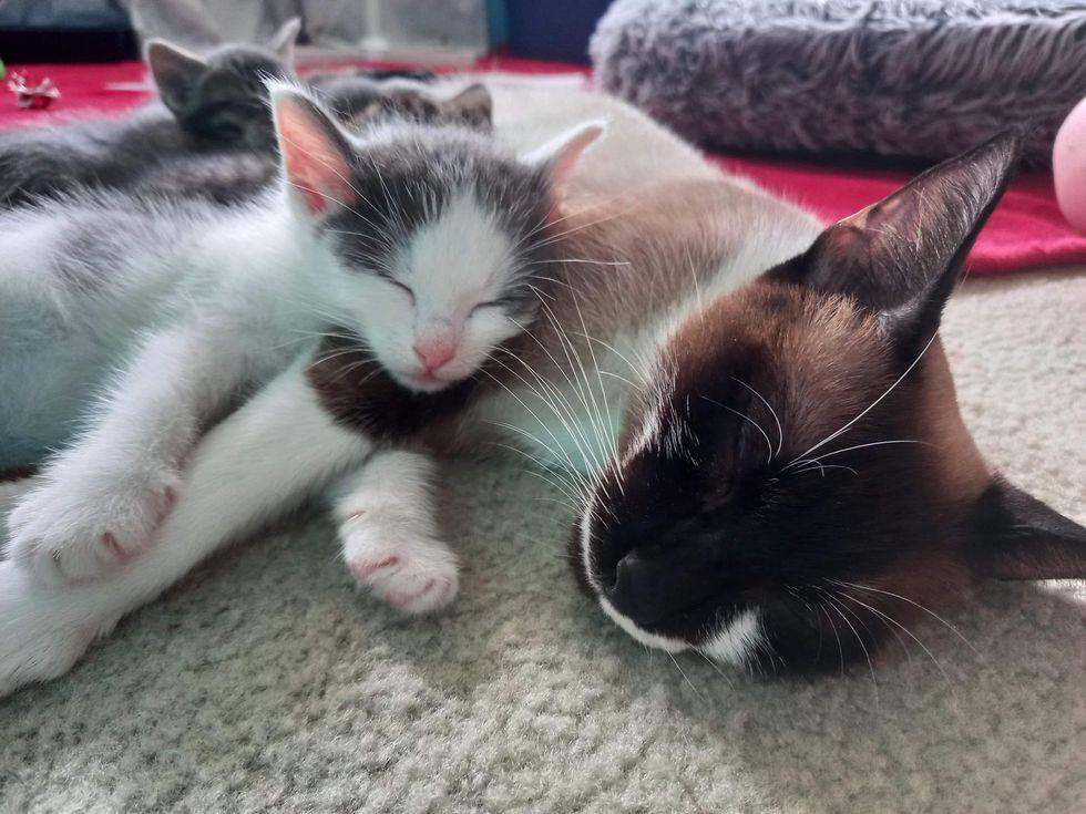 cat and kitten sleeping