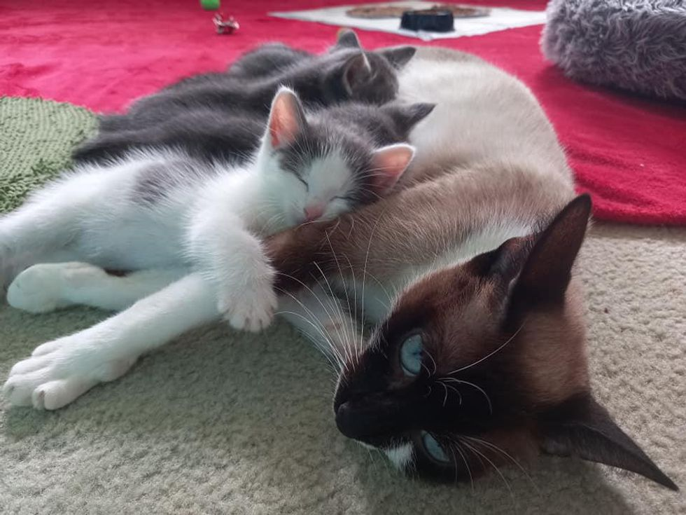 cuddly cat family