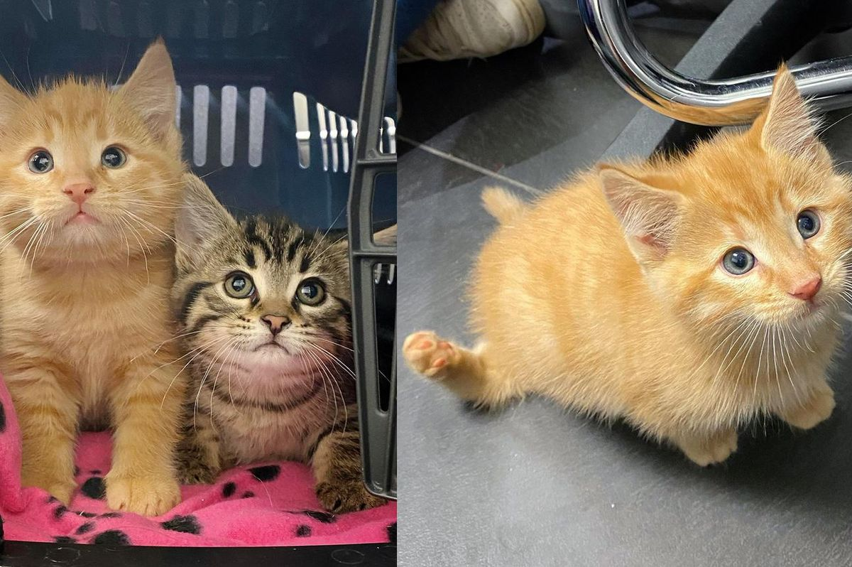 Kitten is So Happy to Walk and Run on All Four Paws for the First Time
