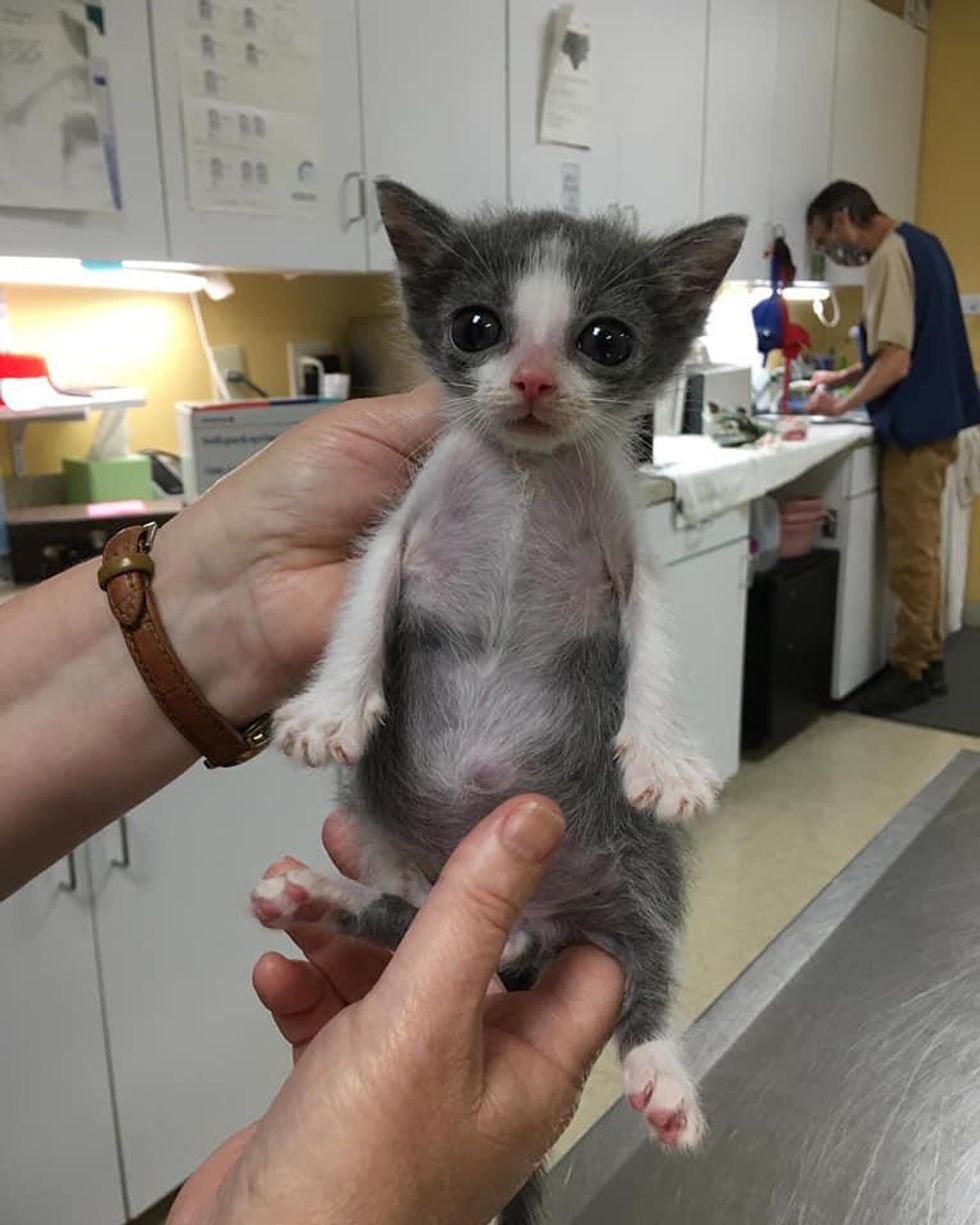 pectus excavatum, special needs kitten